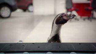 Penguins - Payload