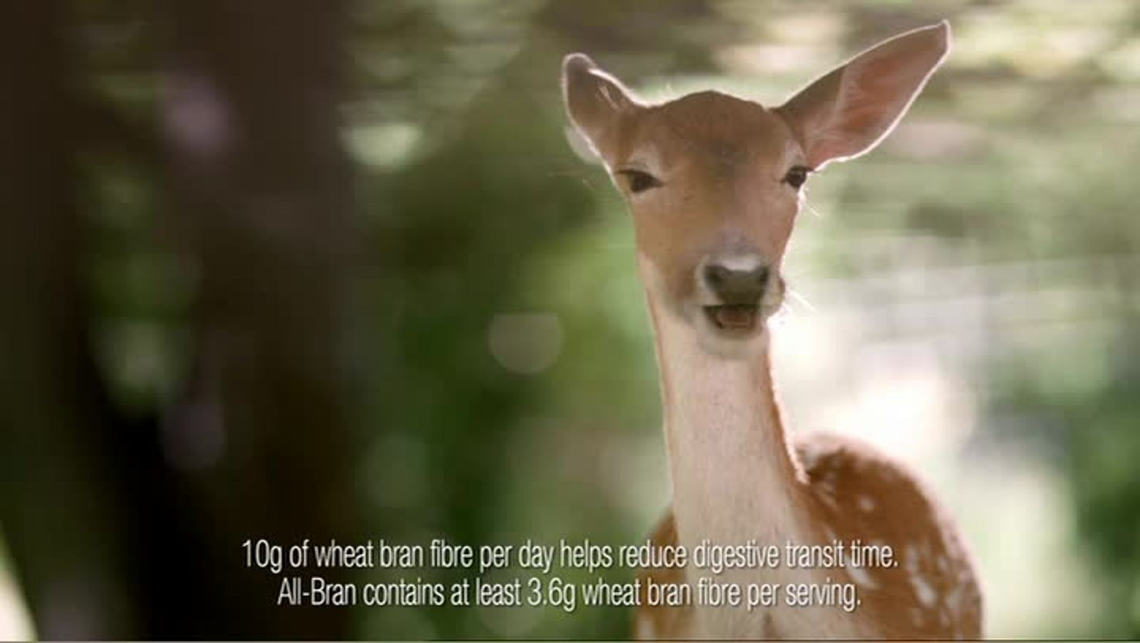 Animal Anthem