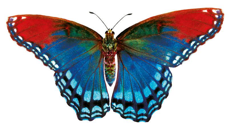 Mariana-Rodrigues-BombaySapphire-RedButterfly