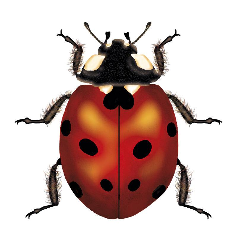 Mariana-Rodrigues-BombaySapphire-Ladybug