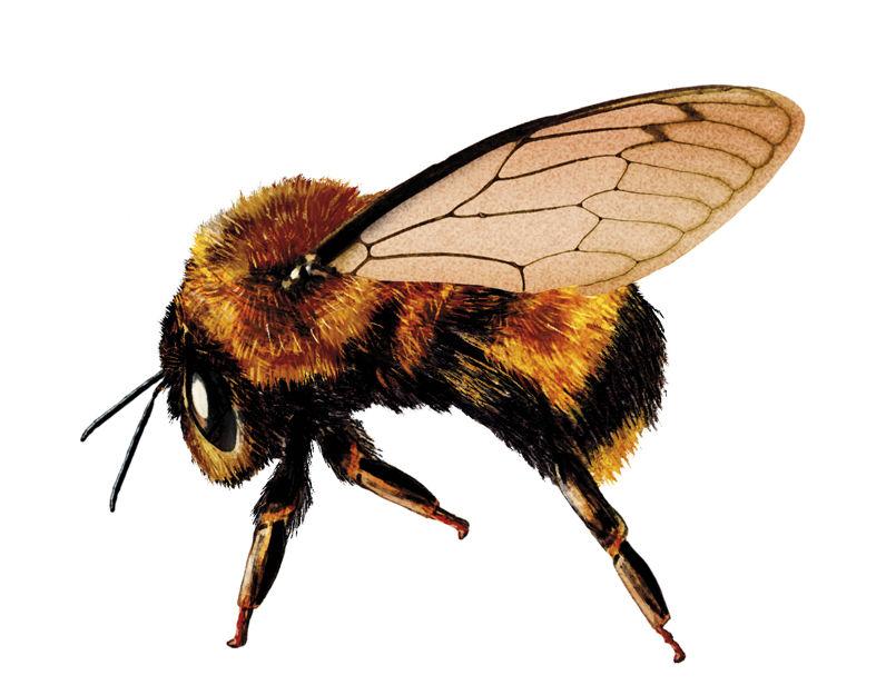 Mariana-Rodrigues-BombaySapphire-Bee