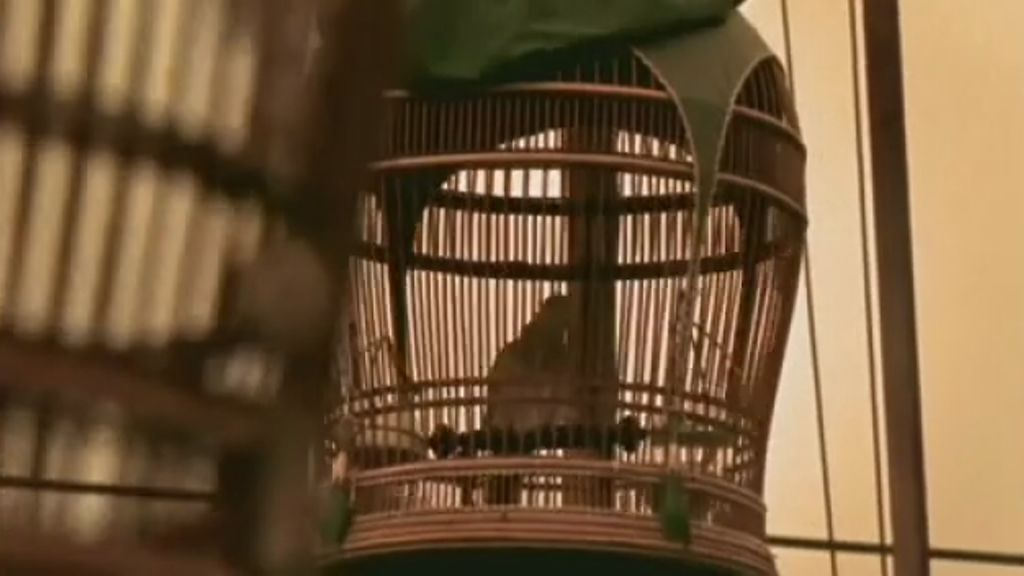 Discovery Channel Asia: Birds | shots