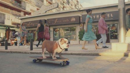 Canine calm glides through new Churchill spot