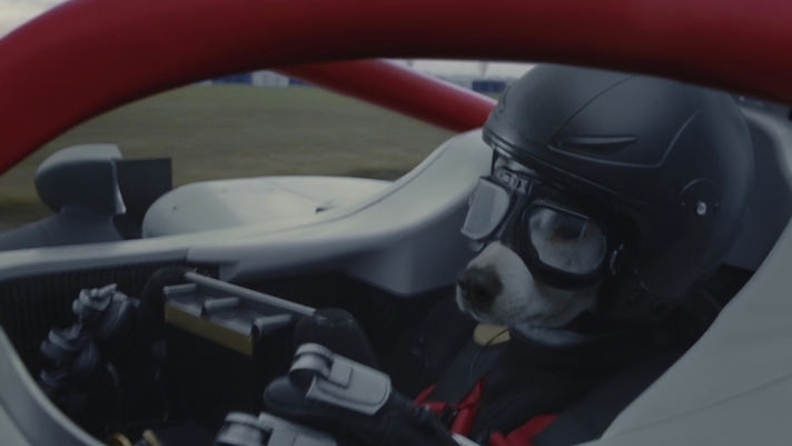 Ninian Doff on teaching dogs to drive