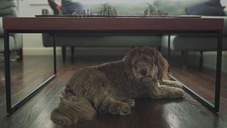 Nutro Pet Food launches new TV ad Who Wants A Walk? from BBDO New York