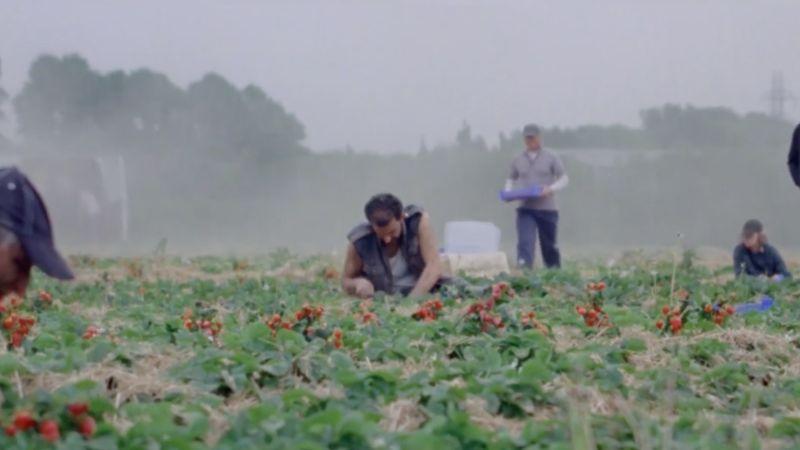 Sunny Life Farm