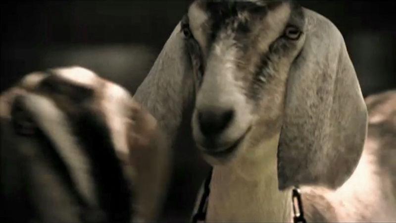 Goats Tears