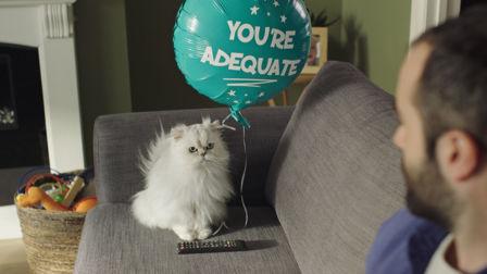 Why Onken leaves you feline appreciated
