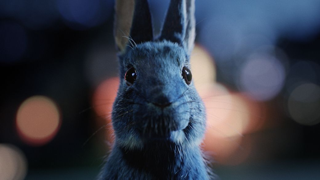 Follow Your Rabbit
