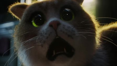 Dare you experience the first-ever horror movie... for cats