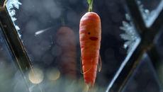 The Amazing Christmas Carrot